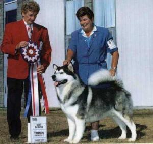 champion golden retriever breeder