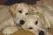 Piper & Quinn – Carrie MacNeil 1 10-2011