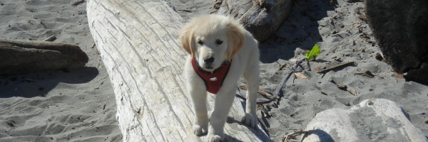 Contact for King Charles Spaniels & English Retriever